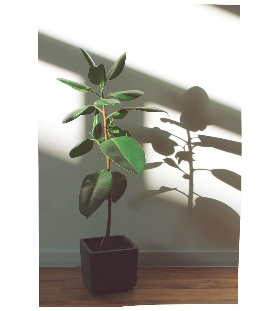 plantas de interiror