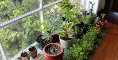 Cuidado de las plantas de invierno