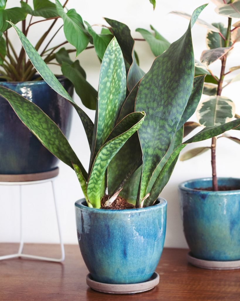 comprar una planta