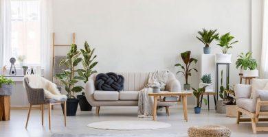 hogar con plantas