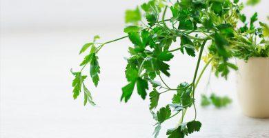 plantas para su cocina